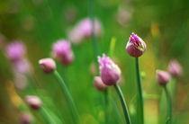Budding flowers by Levente Bodo