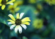 Searing flowers by Levente Bodo