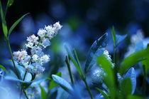 Blue Wonderland by Levente Bodo