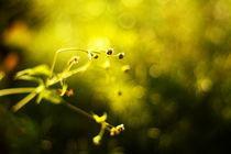 Yellow wonderland by Levente Bodo