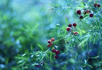 Bokeh berries by Levente Bodo