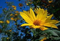 Summer flowers by Levente Bodo