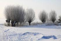 Kopfweiden im Winterkleid 13 by Karina Baumgart
