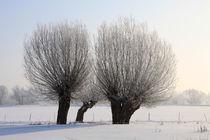 Kopfweiden im Winterkleid 11 von Karina Baumgart