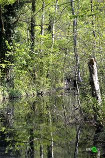 BALZERS - Naturreservat 2 von Vlado  Franjevic