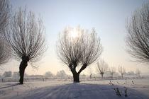 Kopfweiden im Winterkleid 07 by Karina Baumgart