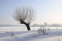 Kopfweiden im Winterkleid 01 von Karina Baumgart