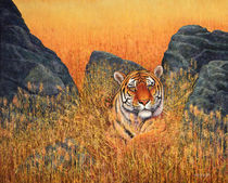 Tiger At Rest von Frank Wilson