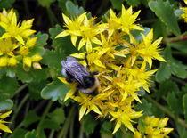 Pollensuche by Eugen Bill