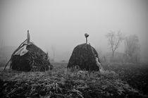 foggy winter day by Dragos Malaescu