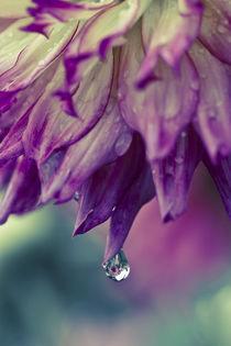 Nach-dem-regen