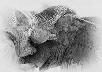 Elephant fight in black & white by Johan Elzenga