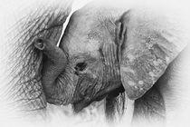 Elephant Calf in Black & White by Johan Elzenga