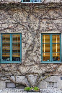Web windows by Katja Kaikkonen