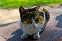 The Feline Touch von Samar Jha