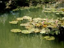 Lotus Pond 2 by Usha Shantharam