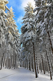 Winterwald by Wolfgang Dufner