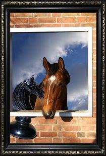 PRECIOUS HORSE by photofiction