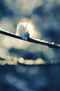 Birth of Spring by Katja Kaikkonen