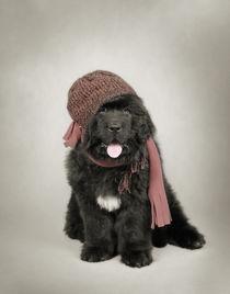 Newfoundland Dog puppy by Waldek Dabrowski
