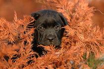 Autumn puppy by Waldek Dabrowski