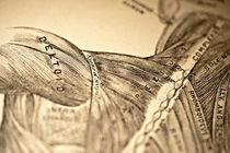 Back & Shoulder Muscles von Mark Strozier
