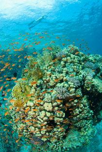 Reef by Konstantin Novikov