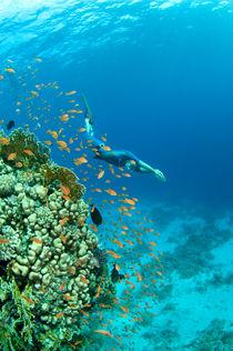 Freediver is swiming close to coral reef von Konstantin Novikov