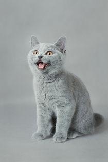 Meow by Waldek Dabrowski