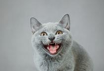 Angry kitten von Waldek Dabrowski