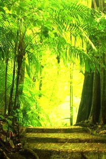 Palenque-lights