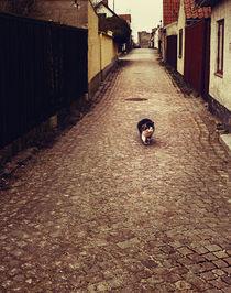 Cat 'n Street by Katja Kaikkonen