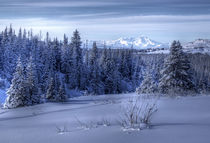 Alaskan landscape in winter by Michele Cornelius