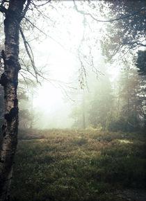 Misty autumn silence I by Susann Johansen