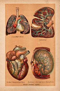 Lungs-liver-heart-stomach