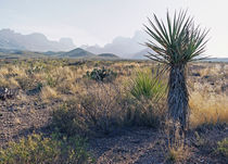 Chisos Mountains by Luc Novovitch
