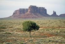 Lone Tree in Monument Valley  von Luc Novovitch