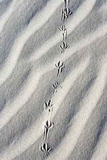 Tracks by Luc Novovitch