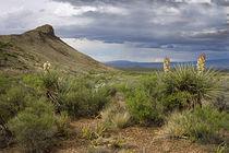 Big Bend National Park by Luc Novovitch