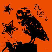Animals owl by Adriana Schiavon