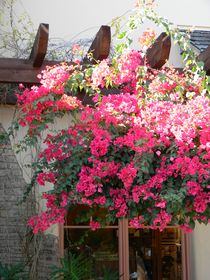 Village Bougainvillea Roof von Warren Thompson