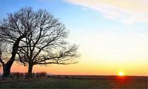Sonnenuntergang an einer alten Eiche by Wolfgang Dufner