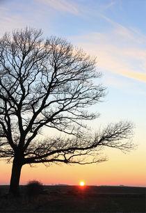 Eiche im Sonnenuntergang von Wolfgang Dufner