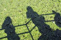 Shadows-on-green