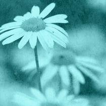 Blumen Kunst Poster von Falko Follert