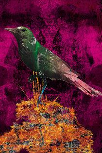 Trigueirao bird by Alexandre Oliveira