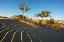 Death Valley dunes by Johan Elzenga