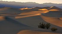 Dunes sunset by Johan Elzenga
