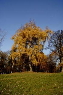 Three colours of autumn by Marta Winiarska