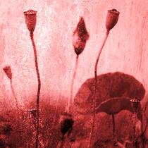 Mohnblumen-kunstbild-2